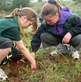 Two young helpers planting native plants along the walkway